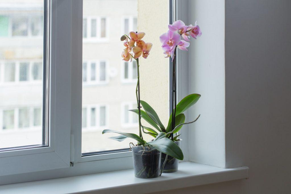 Storczyki - piękne rośliny doniczkowe